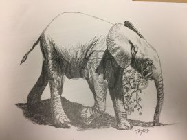 Baby Elephant - Sketch For Survival